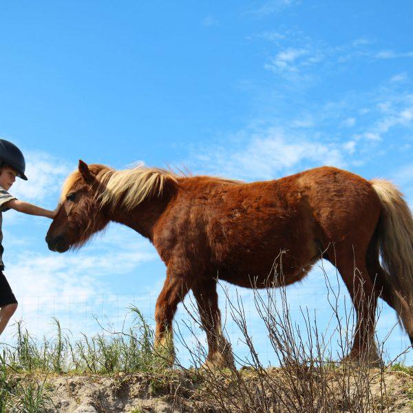 bambino park cheval